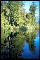 Am Lake Matheson