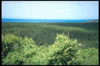 Wald in den Catlins