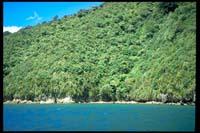 Insel im Tennyson Inlet