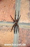 Spinne auf der Campingtoilette in Vivonne Bay