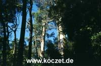 Wald bei Maits Rest