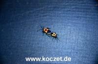 Käfer auf meinem Zelt
